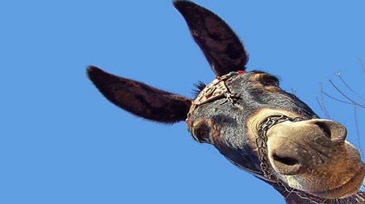 2014-11-24 burro