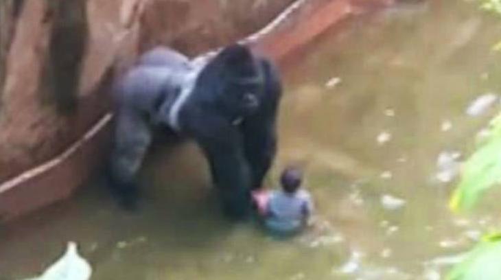 2016-06-09 gorila